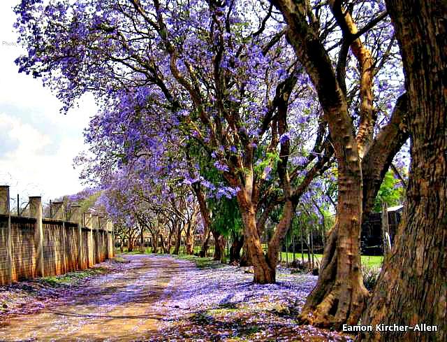 Nairobi Upperhill
