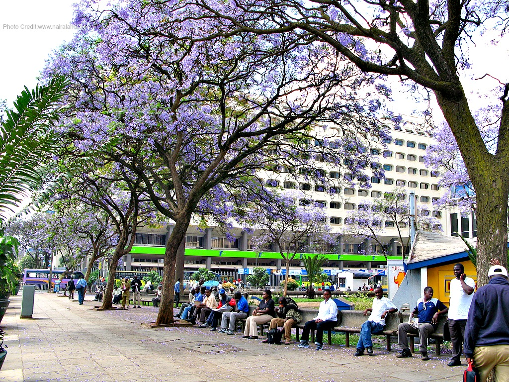 Nairobi city blossoms