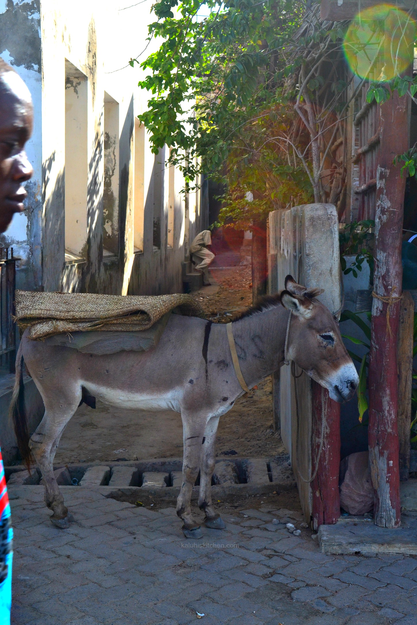 main mode of transportation on Lamu Island is the donkeys which are even more than the number of vehicles on the island_Lamu Island